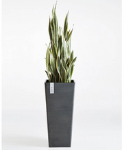 Plant Pot Eco Rectangular