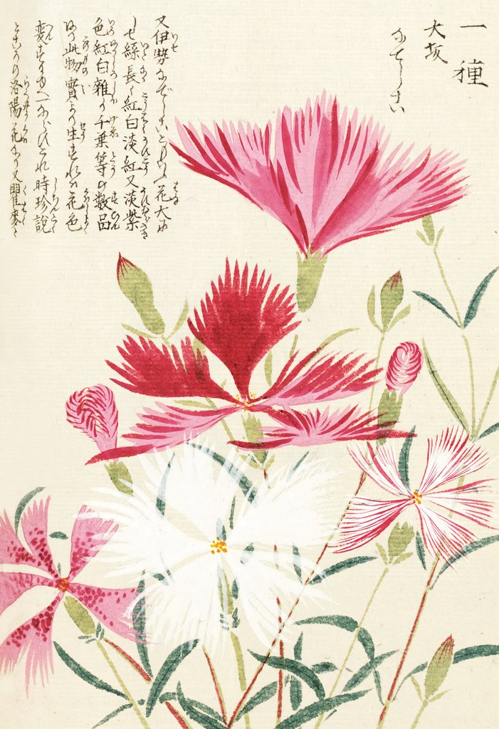 Detail of Honzo Zufu [Carnations] by Kan'en Iwasaki