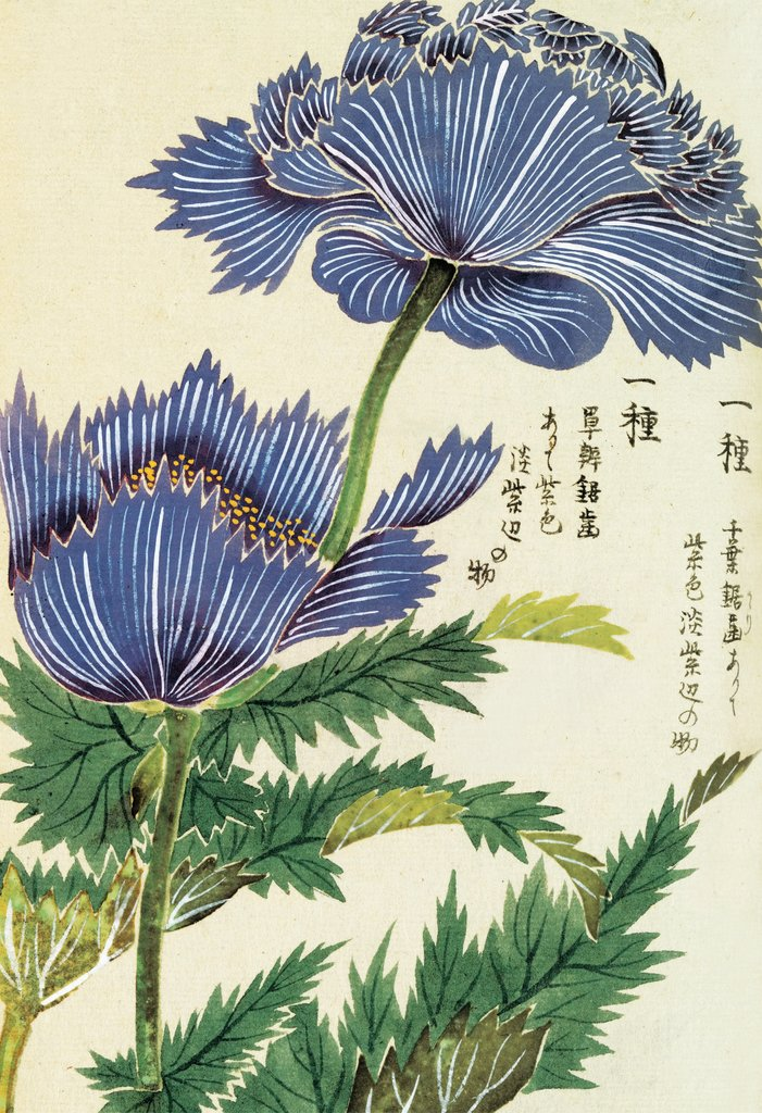 Detail of Honzo Zufu [Blue Flower] by Kan'en Iwasaki