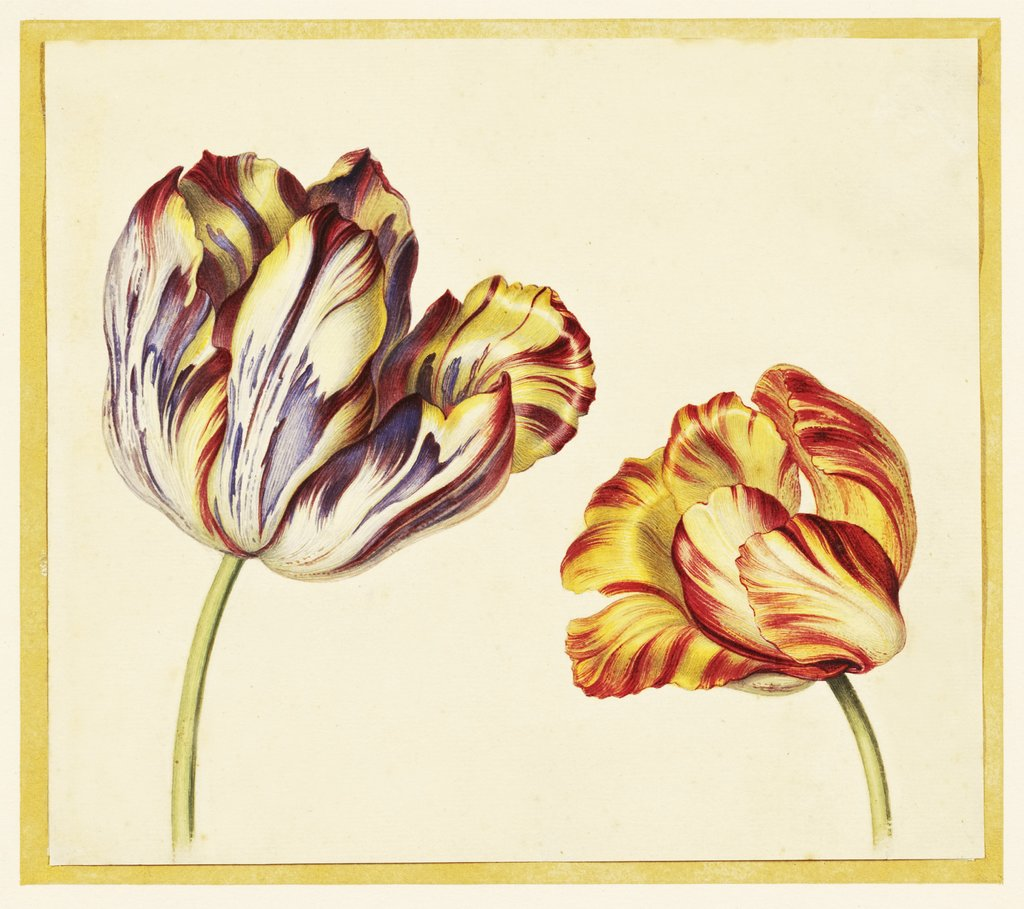 Detail of Tulips by Simon Verelst
