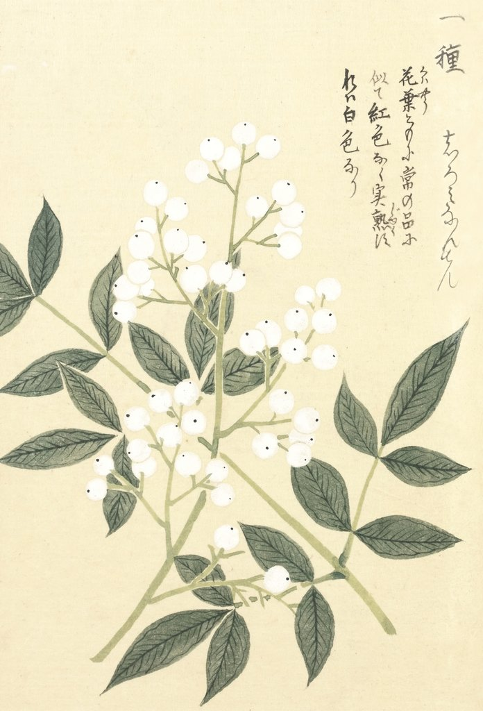 Detail of Honzo Zufu [White Berries] by Kan'en Iwasaki