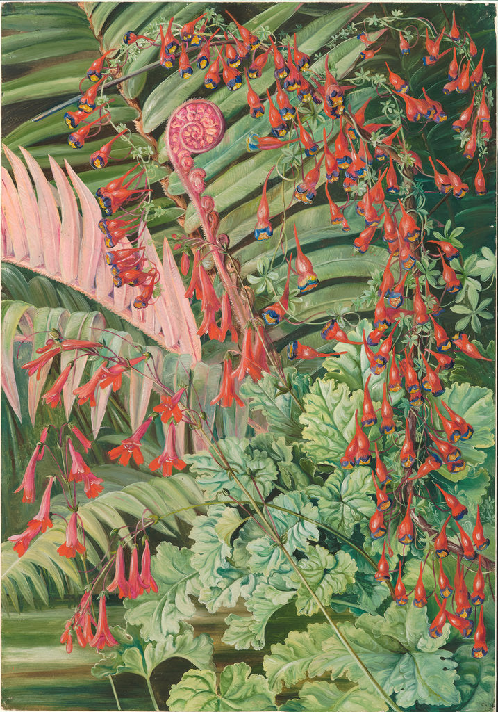 Detail of 5. Fern and flowers bordering the river at Chanleon, Chili, 1885. by Marianne North