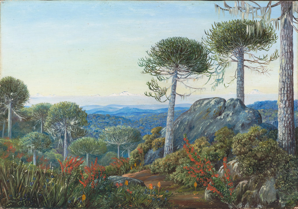 Detail of 6. Seven snowy peaks seen from the Araucaria forest, Chili, 1880. by Marianne North