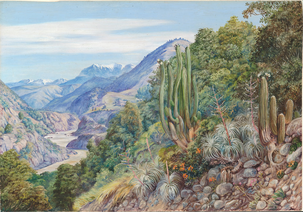 Detail of 10. The baths of Cauquenas in the cordilleras south of Santiago, Chili, 1880 by Marianne North