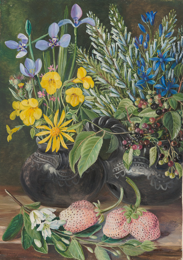 Detail of 18. Chilean flowers in twin mate pot, and Chili, and strawberries, 1880 by Marianne North