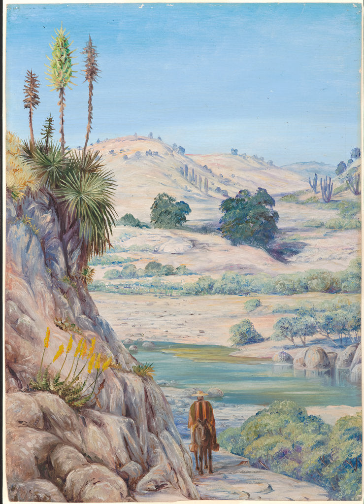 Detail of 19. View near Quilpue, Chili, 1880 by Marianne North
