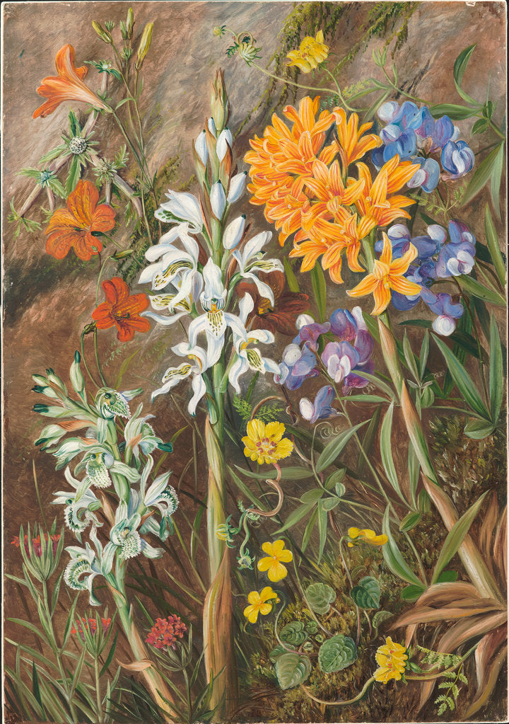 Detail of 22. Chilean ground orchids and other flowers, 1880 by Marianne North