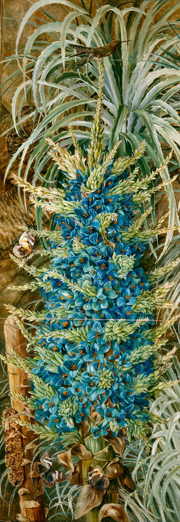 Detail of 25. Inflorescence of the blue puya and Moths, Chili, 1880 by Marianne North