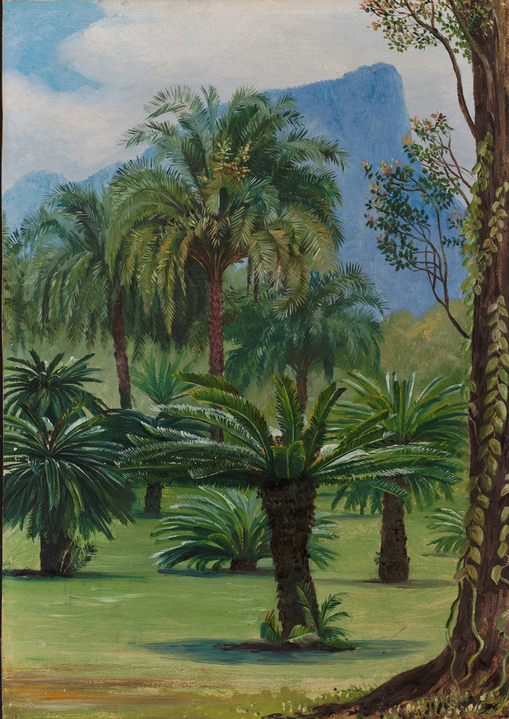 Detail of 28. Group of sago-yielding cycads in the botanic garden at Rio Janeiro, 1880 by Marianne North