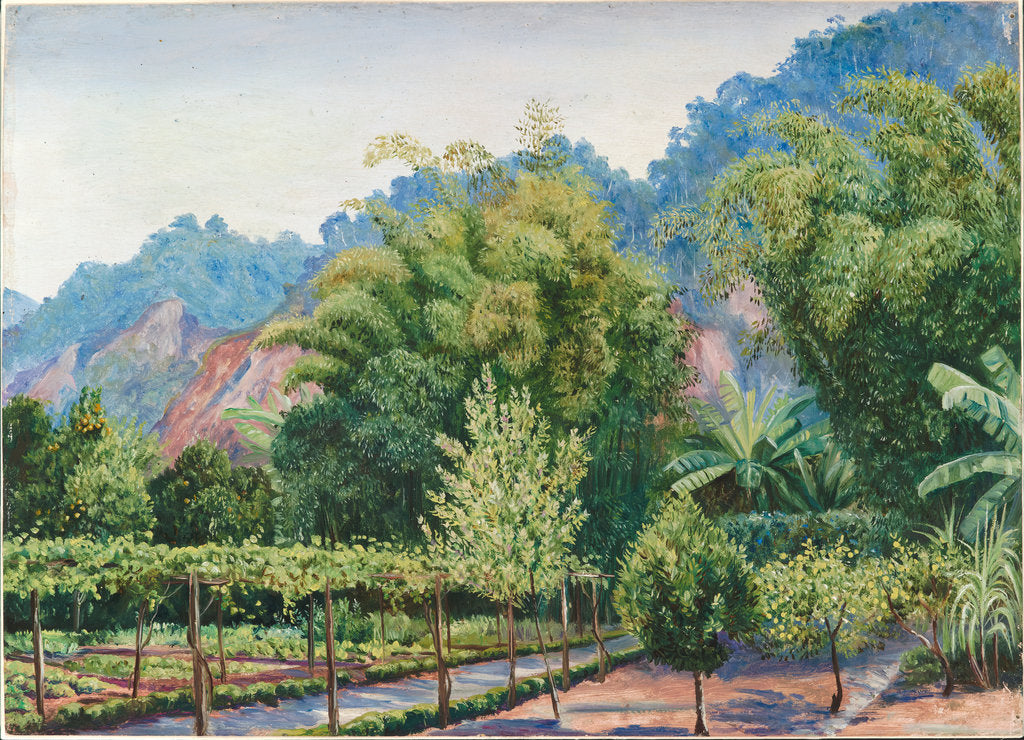 Detail of 34. View of Mr Morit's garden at Petropolis, Brazil, 1880 by Marianne North