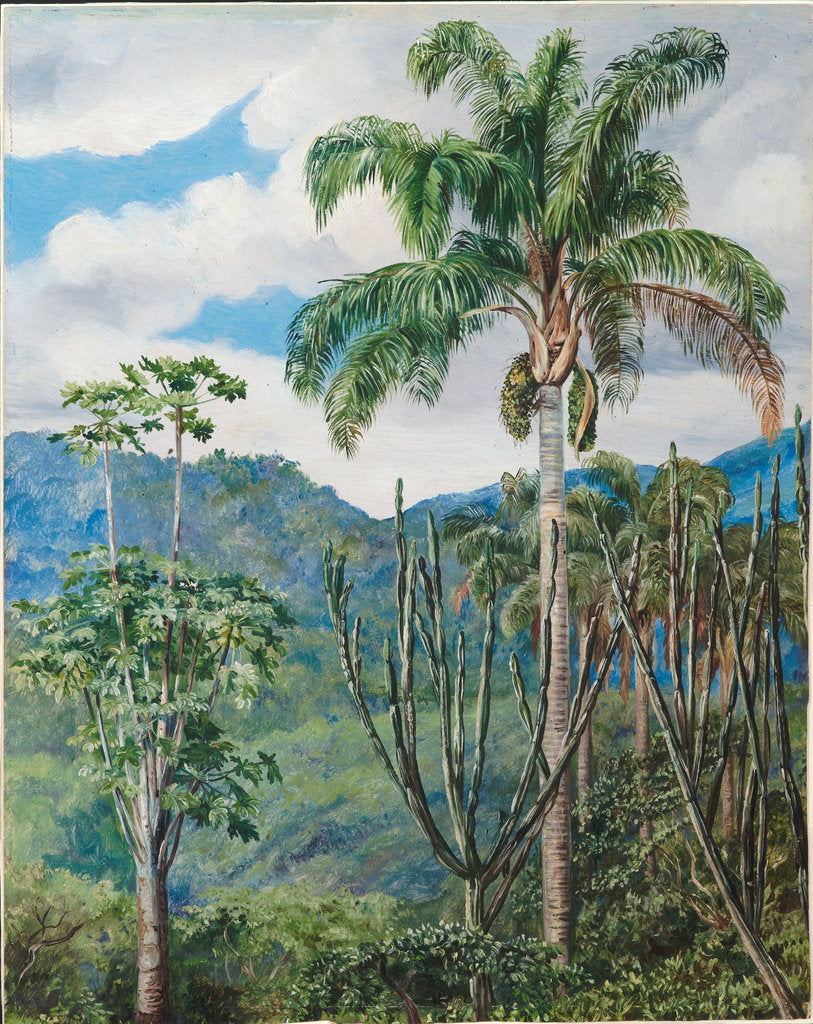 Detail of 36. View in Brazil near Ouro Preto with oil palms, 1880 by Marianne North