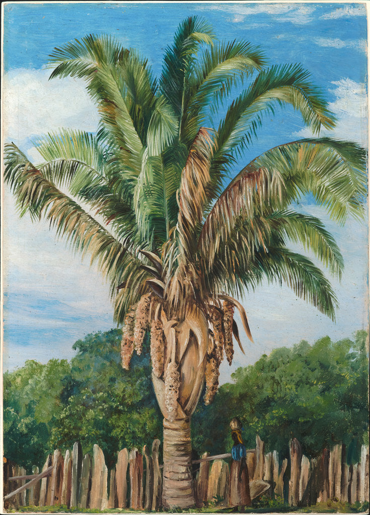 Detail of 41. Indian palm at Sette, Lagoa, Brazil, 1880 by Marianne North