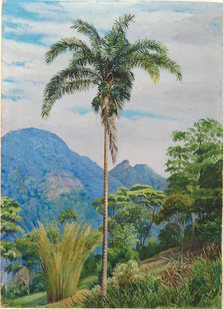 Detail of 43. Tijuca, Brazil, with a palm in the foreground, 1880 by Marianne North