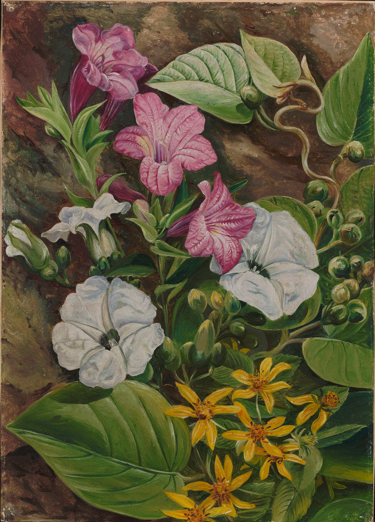 Detail of 44. Some Brazilian flowers, 1880 by Marianne North