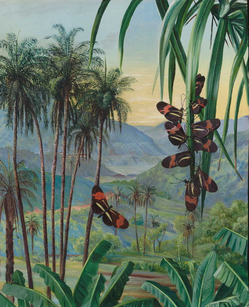 Detail of 50. Landscape at Morro Velho, Brazil, 1880 by Marianne North