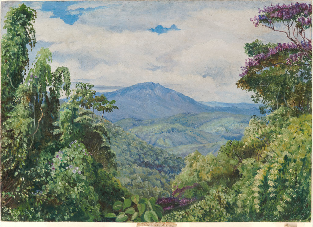 Detail of 53. View of the Piedade Mountains, from Gongo, Brazil, 1880 by Marianne North