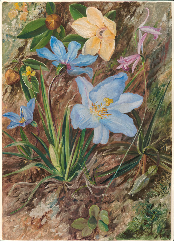 Detail of 55. Brazilian wild flowers, 1880. by Marianne North