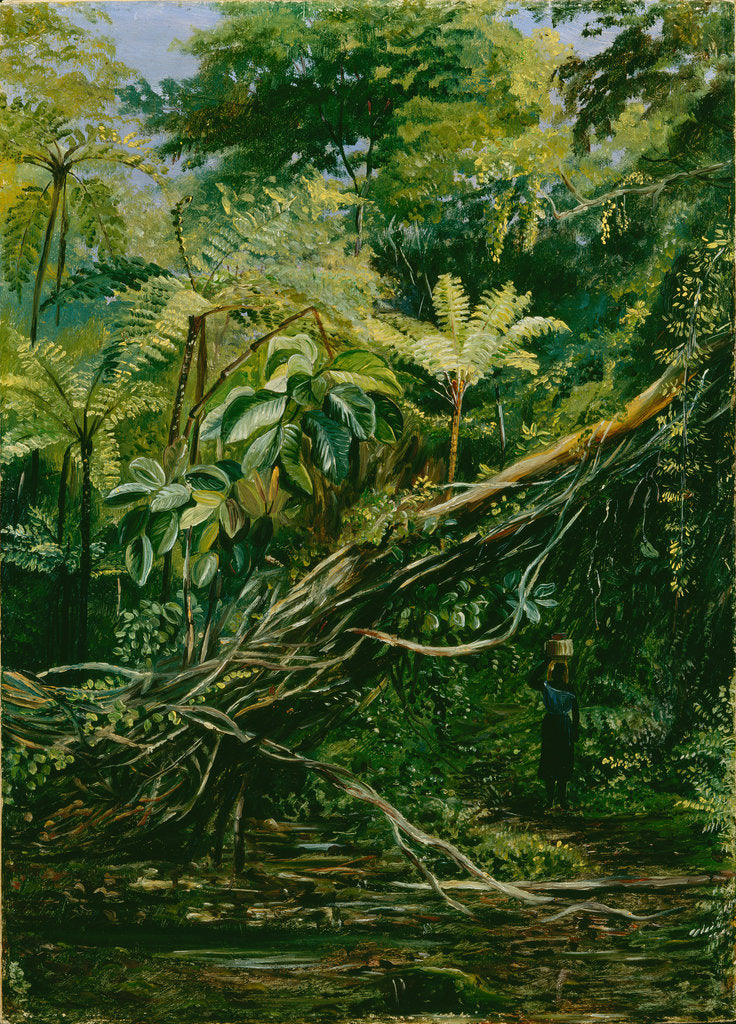 Detail of 56. View under the ferns at Gongo, Brazil, 1880 by Marianne North