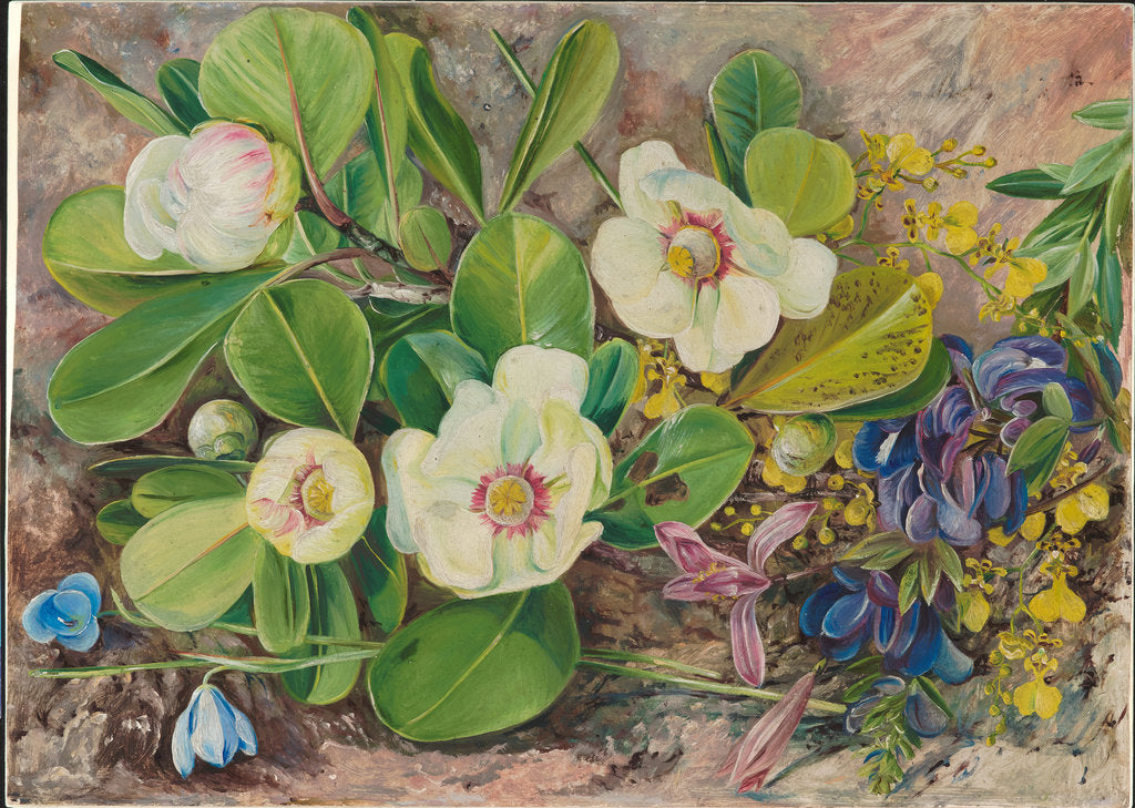 Detail of 57. Wild flowers of Brazil, 1880 by Marianne North