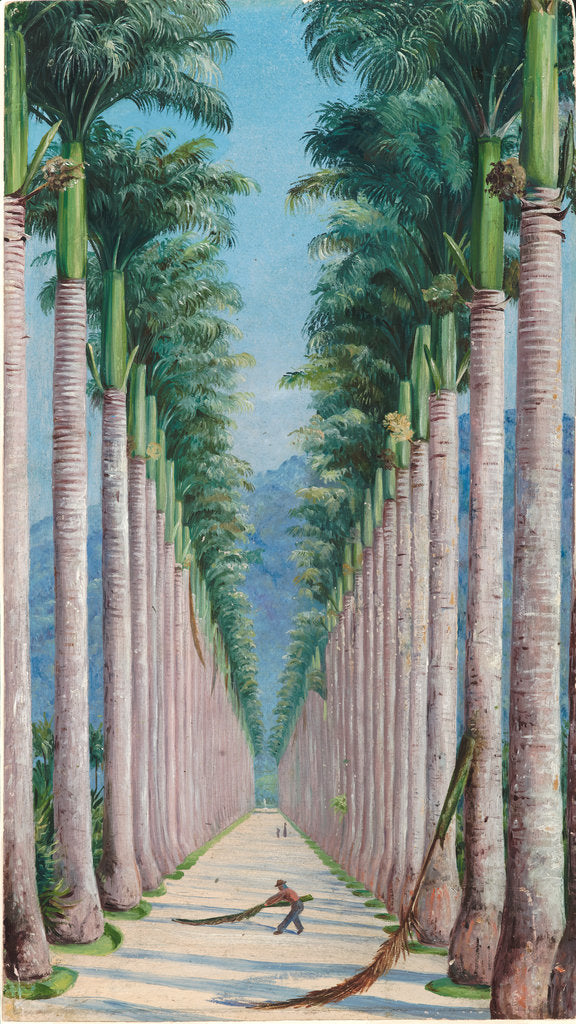 Detail of 63. Avenue of royal palms at Botafogo, Brazil, 1880 by Marianne North