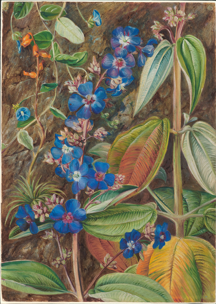 Detail of 69. Wild flowers of Casa Branca, Brazil, 1880 by Marianne North