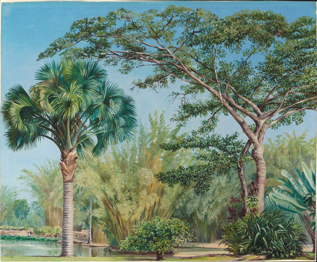 Detail of 71. Palm, bamboos and India-rubber trees in the botanic garden, Rio, 1880 by Marianne North