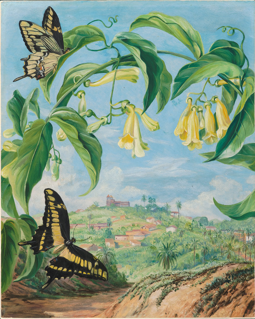 Detail of 73. Yellow Bignonia and swallow-tail butterflies with a view of Congonhas, Brazil, 1880 by Marianne North