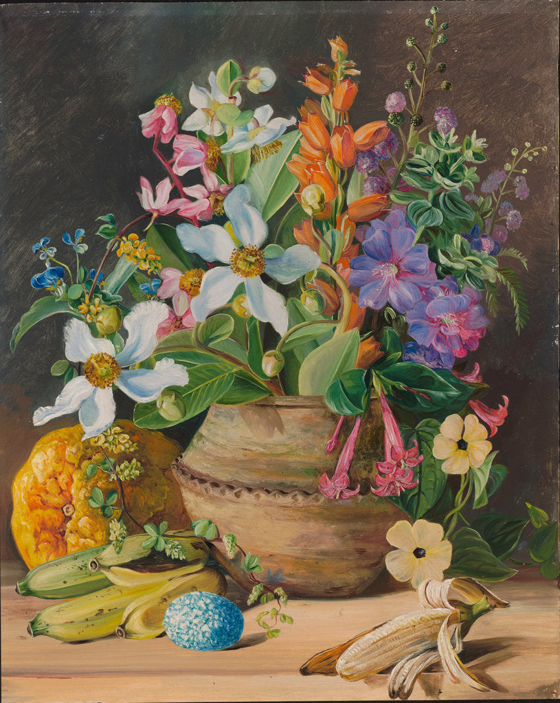 Detail of 76. Group of wild meadow flowers, of Brazil. Golden Banana and Euemba's (Crotophaga major) Egg, 1880 by Marianne North