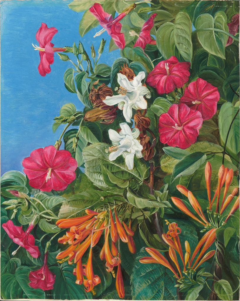 Detail of 77. Wild flowers at Morro Velho, Brazil, 1880 by Marianne North