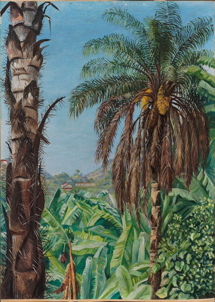 Detail of 80. Cocoera palms and bananas, Morro Velho, Brazil, 1880 by Marianne North
