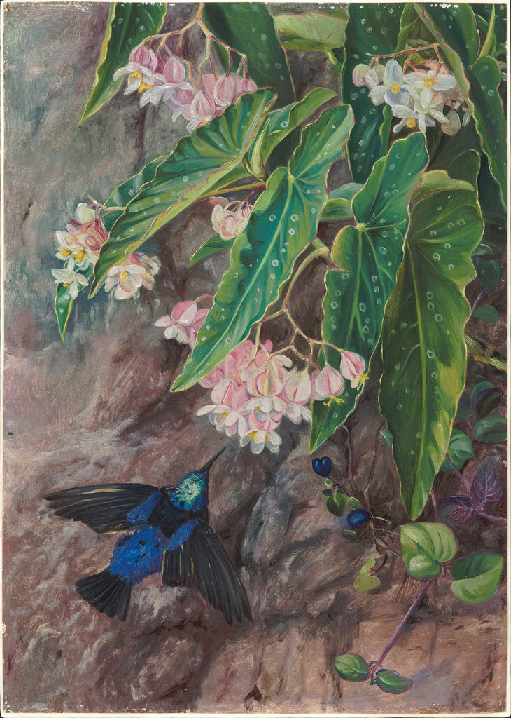 Detail of 81. Brazilian flowers, 1880 by Marianne North