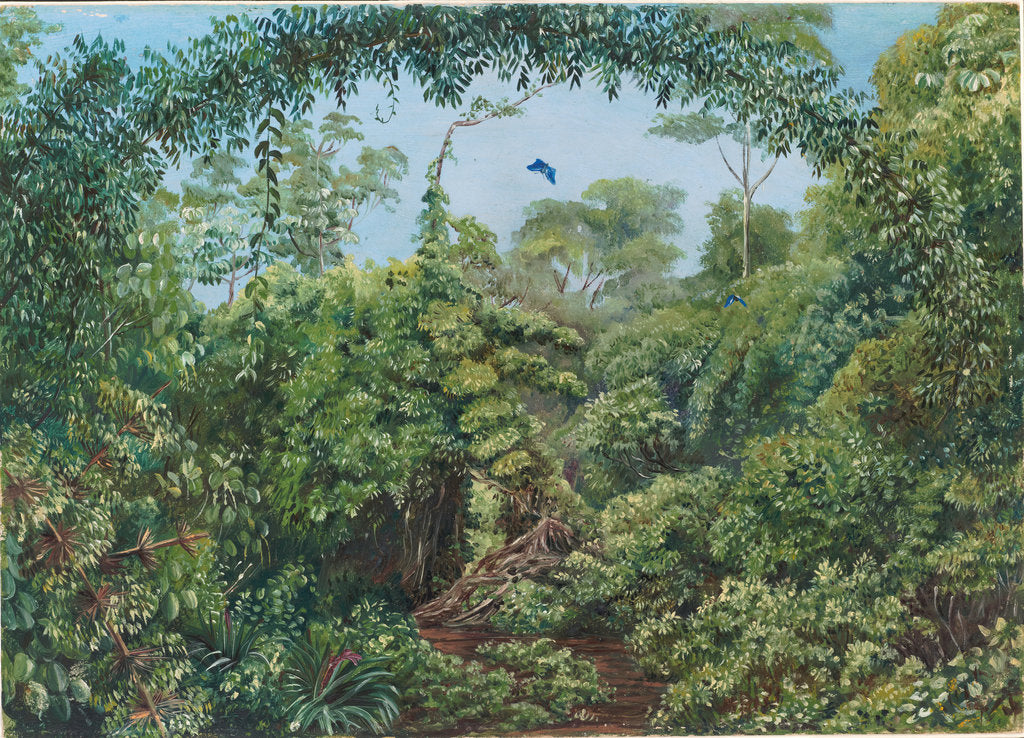 Detail of 82. Butterflies' Road through Gongo forest, Brazil,1880 by Marianne North