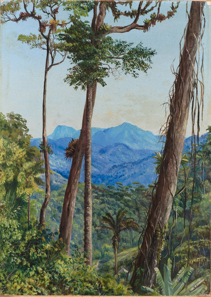 Detail of 83. View from Mr. Weilhorn's house, Petropolis, Brazil,1880 by Marianne North