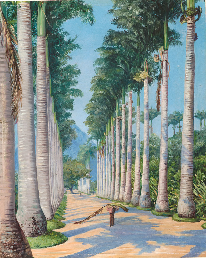 Detail of 85. Side avenue of royal palms at Botafoga, Brazil,1880 by Marianne North