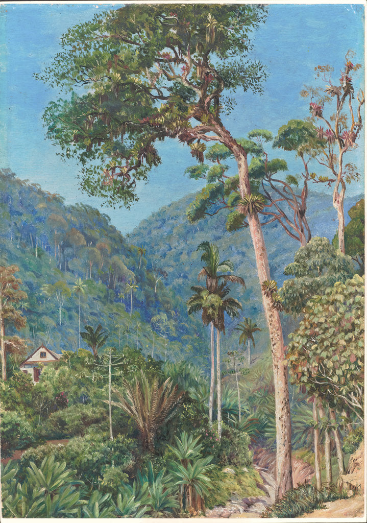 Detail of 90. Glimpse of Mr. Weilhorn's house at Petropolis, Brazil, 1880 by Marianne North