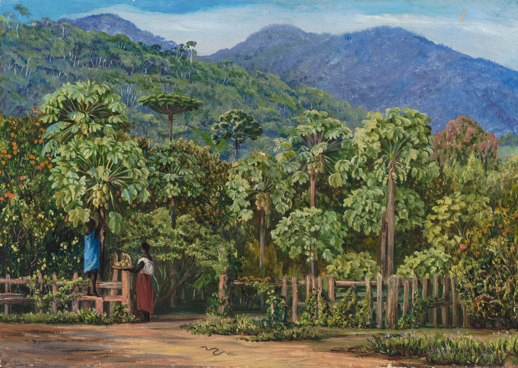 Detail of 91. Papaw trees at Gongo, Brazil, 1880 by Marianne North