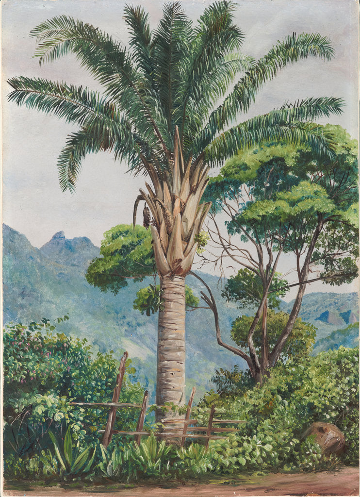 Detail of 94. Oil palm at Tijuca, Brazil, 1880 by Marianne North