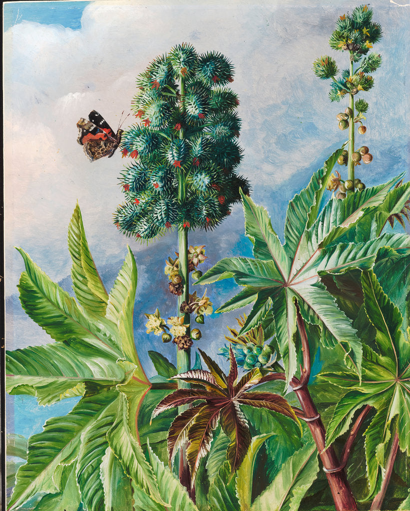 Detail of 101. Palma christi or castor oil, 1873 by Marianne North