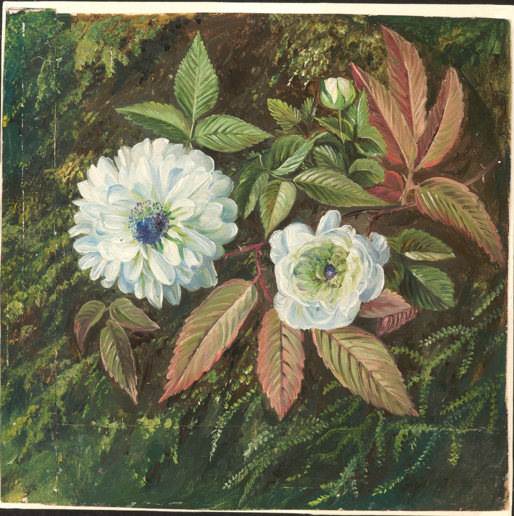 Detail of 109. Foliage and Double Flowers of the Sandal-wood Bramble, 1872 by Marianne North