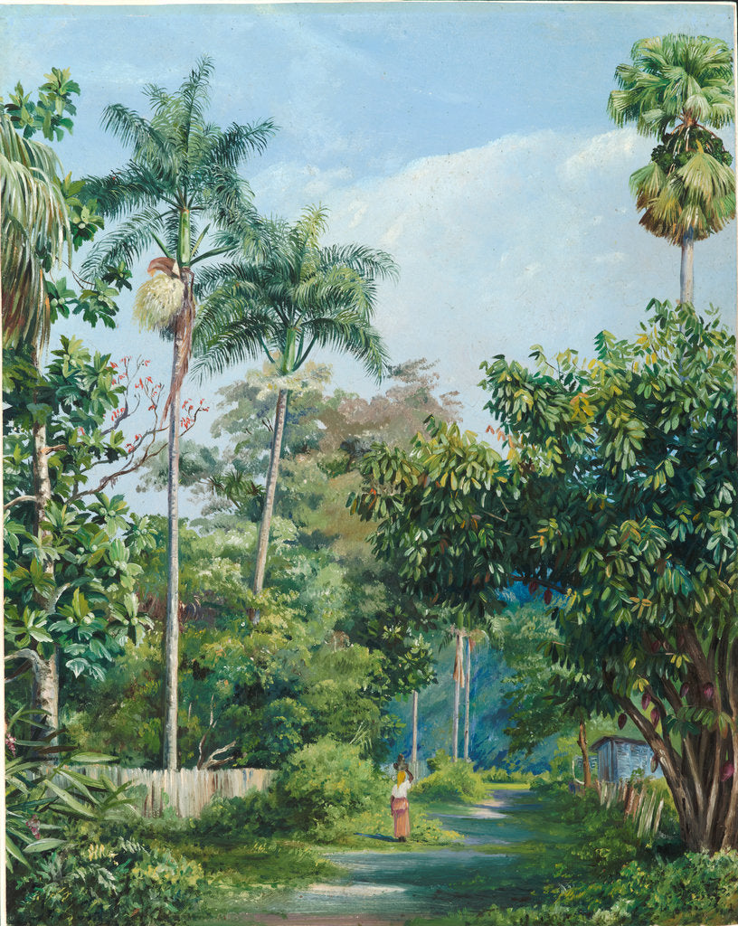 Detail of 113. Road near Bath, Jamaica, with cabbage palms, bread fruit, cocoa, and coral trees, 1872 by Marianne North