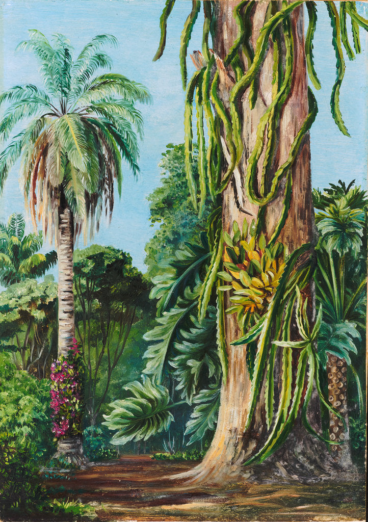 Detail of 117. Scene in Dr. Lund's garden at Lagoa Santa, Brazil, 1873 by Marianne North