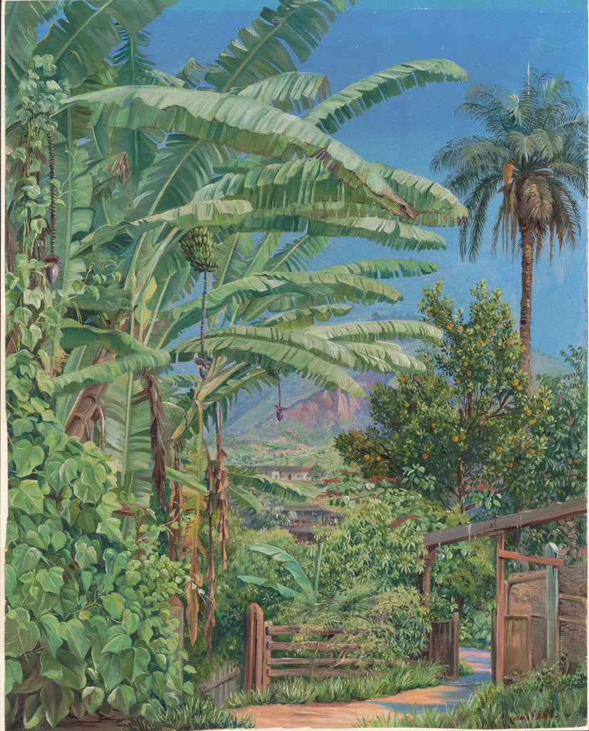 Detail of 120. Bananas and orange trees, a palm and a bush of noche buena in a garden at Morro Velho, Brazil, 1873 by Marianne North