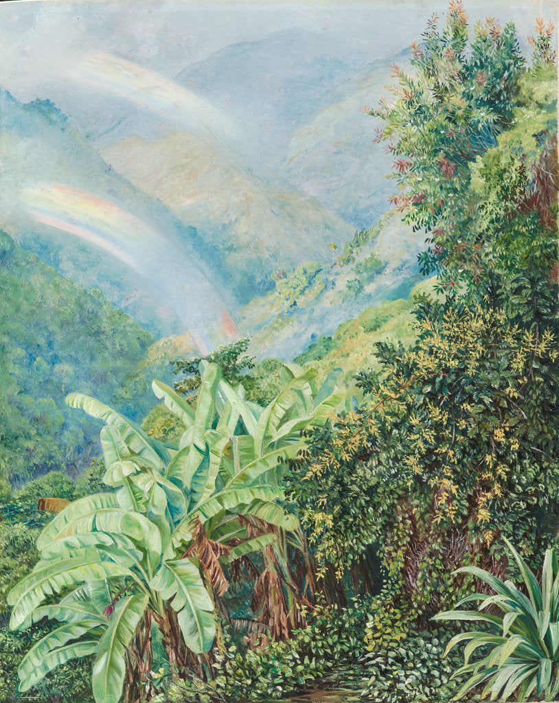 Detail of 126. View from the artist's house in Jamaica, with double rainbow, 1872 by Marianne North