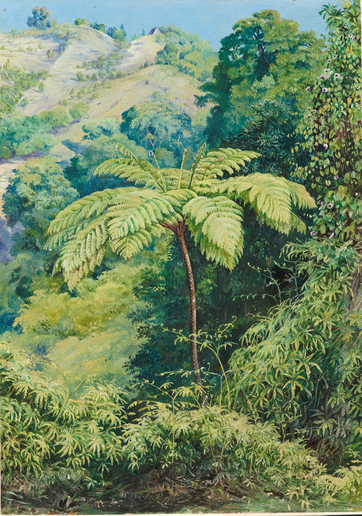 Detail of 131. Tree fern and whish-whish in the Punch Bowl valley, Jamaica, 1872 by Marianne North