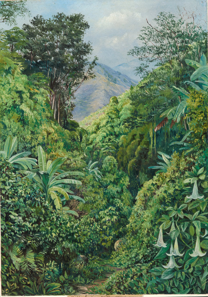 Detail of 132. Valley behind the artist's house at Gordontown, Jamaica, 1872 by Marianne North