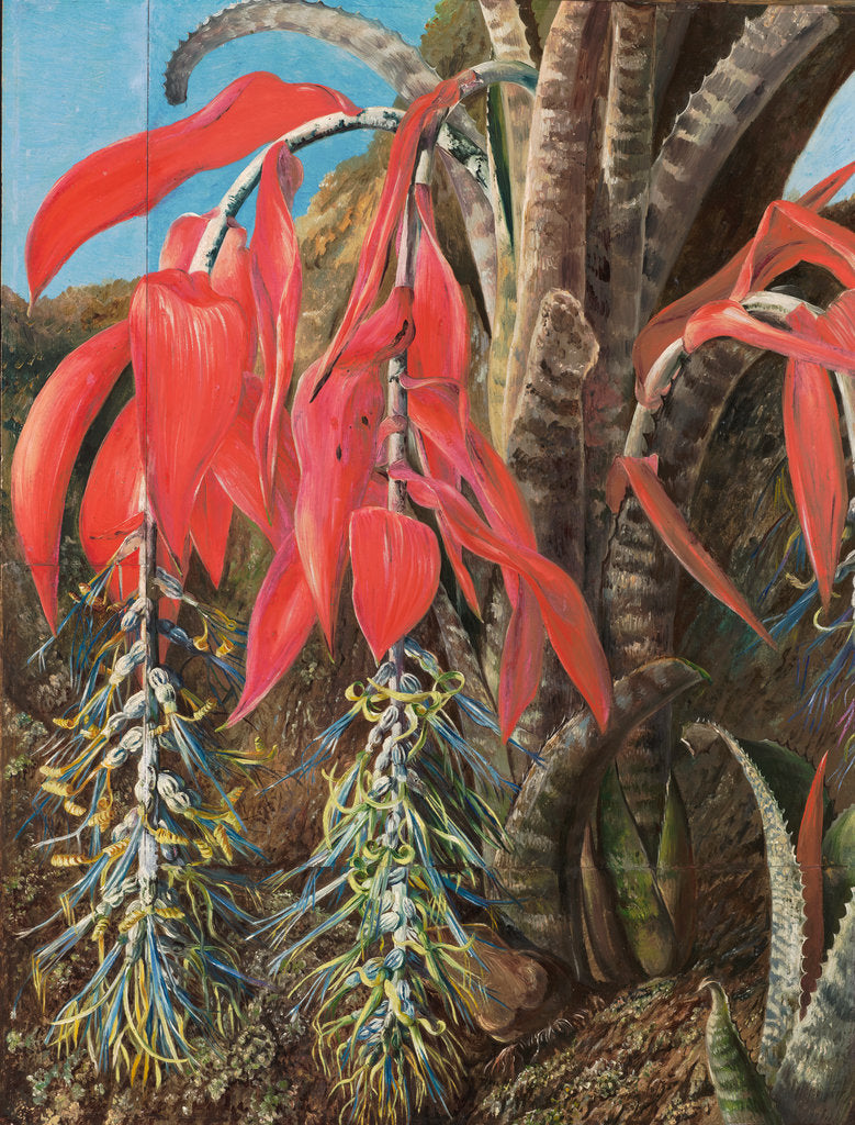 Detail of 139. A Brazilian epiphyte or air plant, 1873 by Marianne North