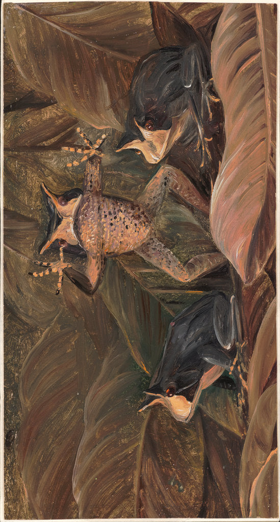 Detail of 140. Tree frogs, found amongst dead leaves, 1873 by Marianne North