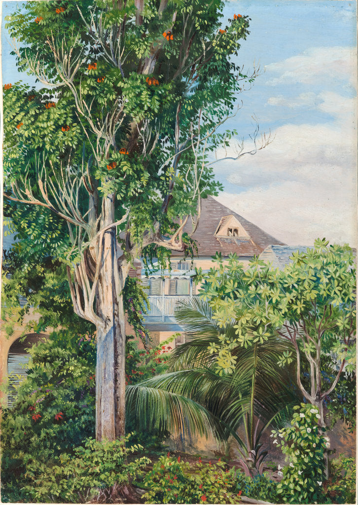 Detail of 146. The garden of King's House, Spanish Town, Jamaica, 1872 by Marianne North