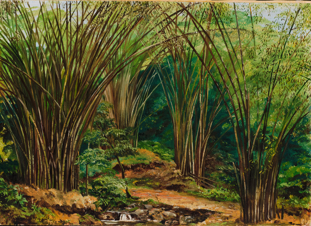 Detail of 148. Valley of bamboos, near Bath, Jamaica , 1873. by Marianne North