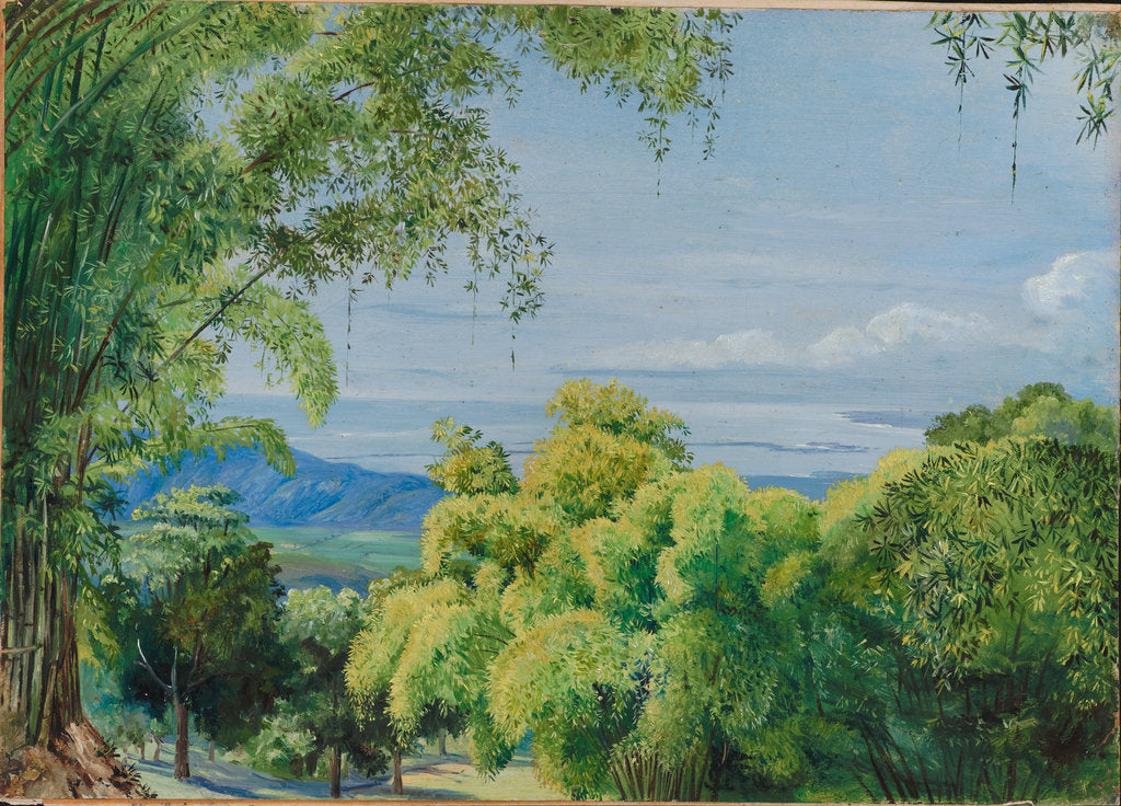 Detail of 149. View over Port Royal, Jamaica, with bamboos in the foreground, 1872. by Marianne North